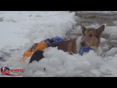 DOGS IN ICY RIVER...DOG RESCUE....3 DOGS TRAPPED....ICY RIVER RESCUE