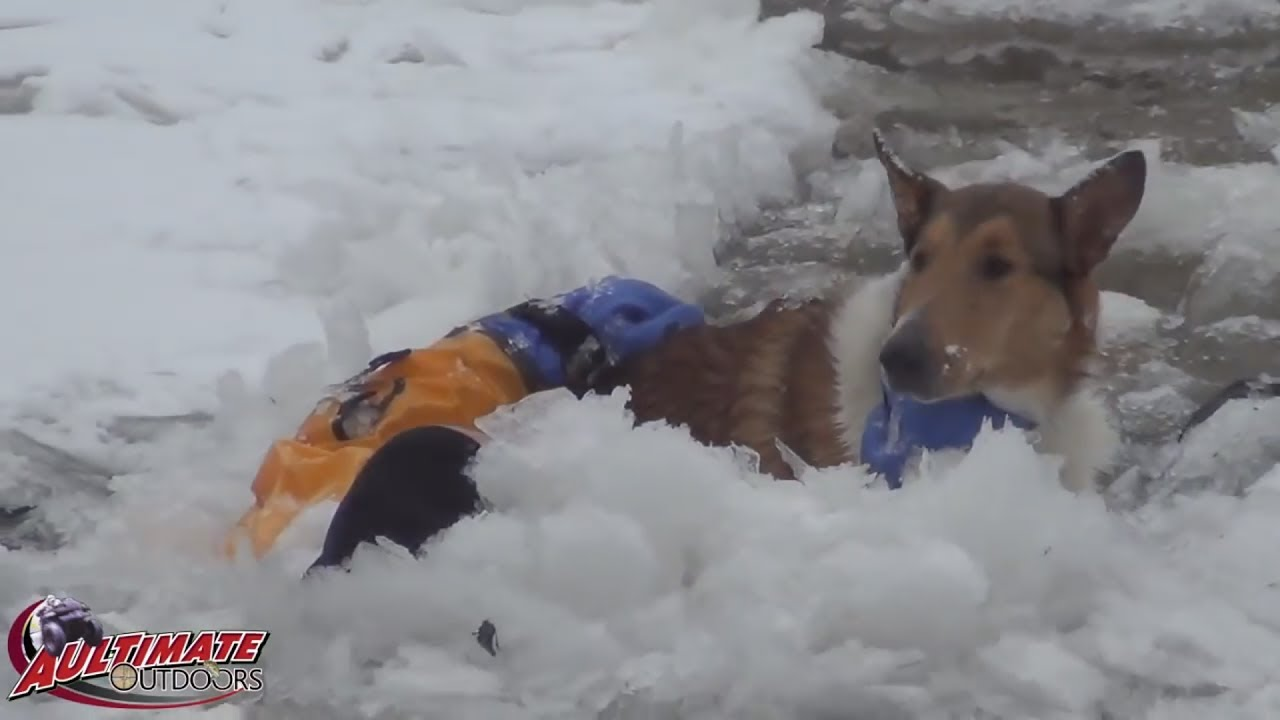 Dogs In Icy River Dog Rescue 3 Dogs Trapped Icy