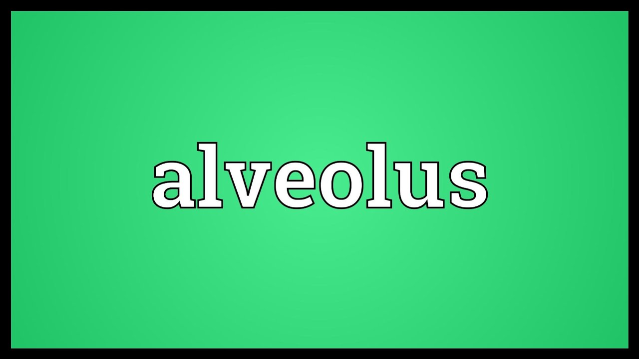 Alveolus Meaning Youtube