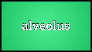 Alveolus Meaning