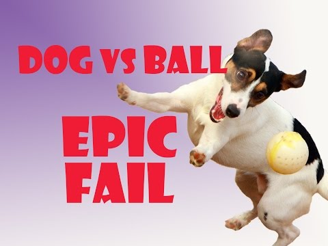Funny dog video – Dog catches the ball Epic fail