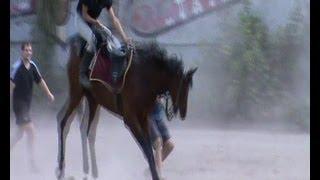 Заездка коня