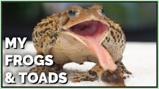 Meet my Pet Amphibians! (Frogs, Toads & Axolotl)