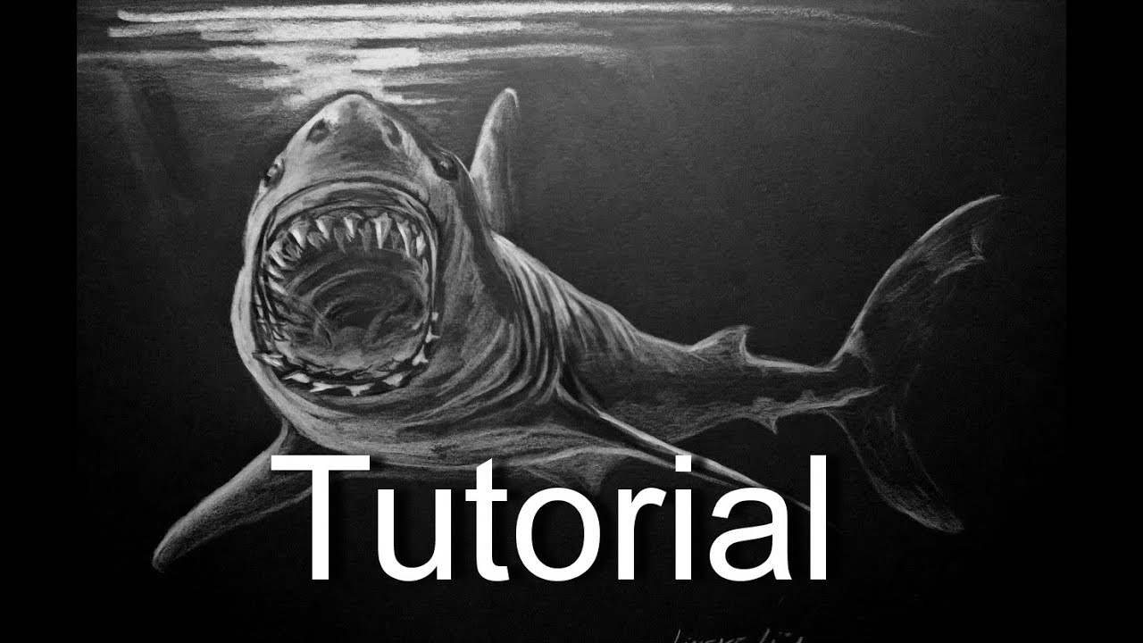 drawing the great white shark in pastel pencils black paper