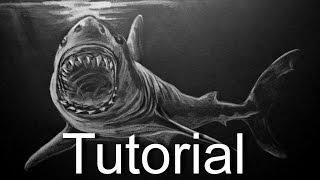 shark drawing easy beginners