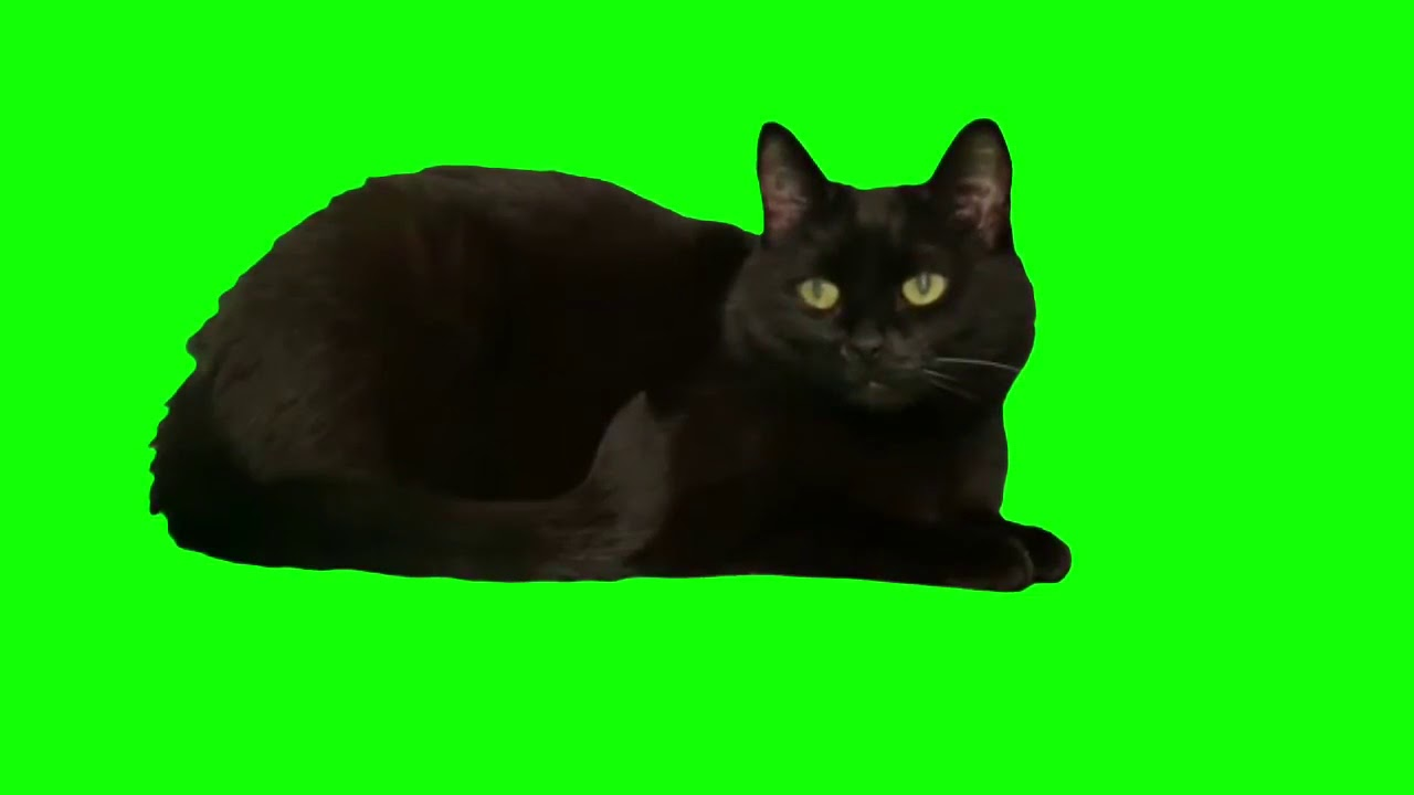 Фото кота на зеленом фоне