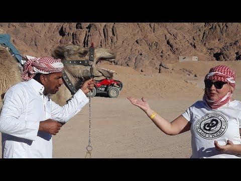 Египет Шарм эль Шейх | сафари тур в пустыне | багги на прокат | бездорожье в пустыне