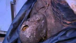 syria mutilated bodies youtube