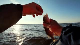 Кубенское озеро Рыбалка с Коляном Тролинг Трофейная щука Судак Отводной поводок Окунь