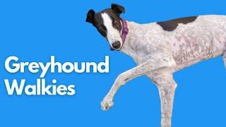 Adopting a Greyhound - Greyhound walk