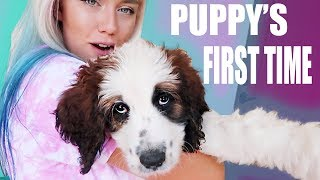 puppy-s-first-time-trying-new-things-bath-collar-walking-hilarious