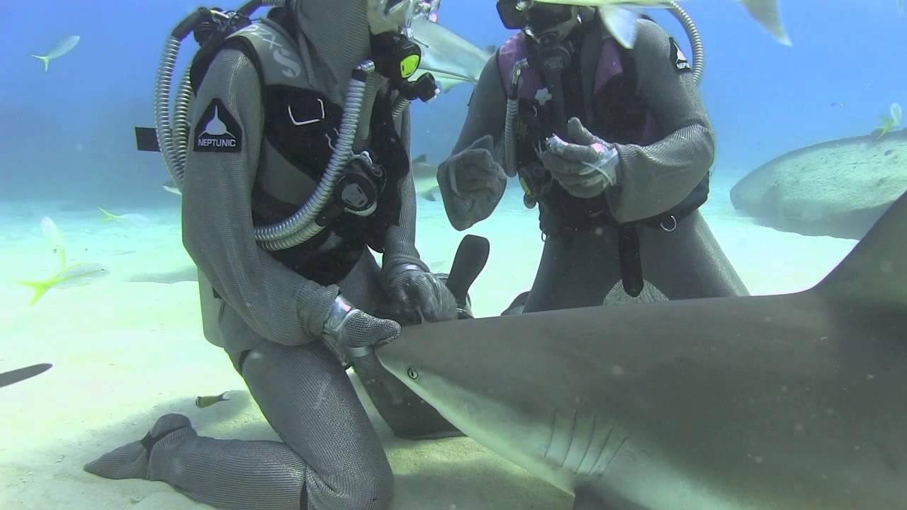 Ataque Tiburon Estrella Porno Fake por qué la 'moda' de nadar con tiburones es el turismo de