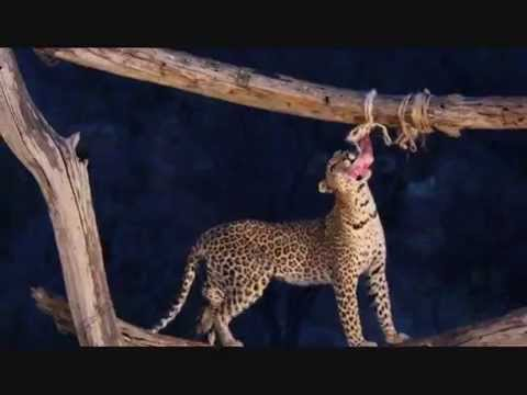 On Safari in Kenya: Tsavo West