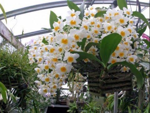 красивые фото орхидей фото
