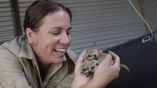 Baby Meerkats Born at Symbio Wildlife Park