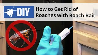 How to Get Rid of Roaches with a Roach Bait Treatment