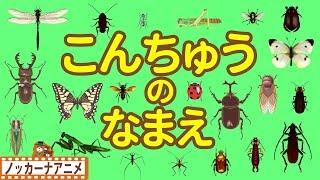 昆虫の名前を覚えるフラッシュカード風アニメです。カブトムシやクワガタムシ、カマキリ、モンシロチョウなど色々な昆虫が登場します。...