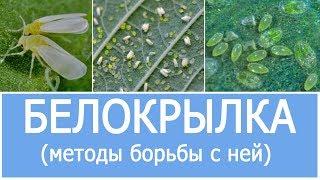 видео Средство для борьбы с микроорганизмами