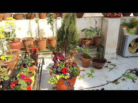 Container Garden // Creative Container Garden Idea    Fun Gardening