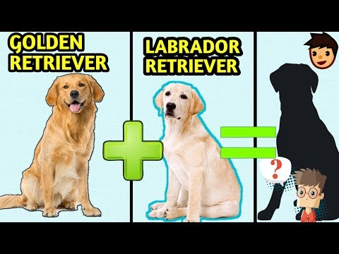 10 Incredible Mixed Cross Hybrid  Dog Breeds / Finest Dog Cross breeds