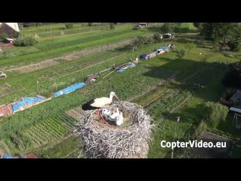 Flying Camera  Storks at High Tatras   Bociany v Pribyline