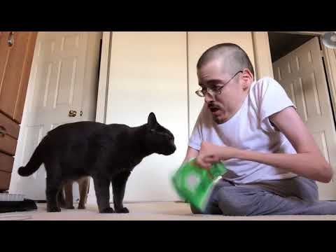 COME HERE KITTY KITTY 🐱  Ricky Berwick
