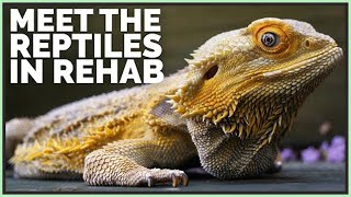 meet-all-my-sick-reptiles-in-rehab
