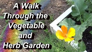 A Quick Walk Through The Vegetable & Herb Garden, Brussel Sprouts, Dill, More