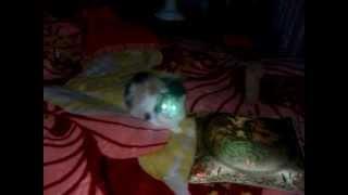 Как светятся глаза кошки.