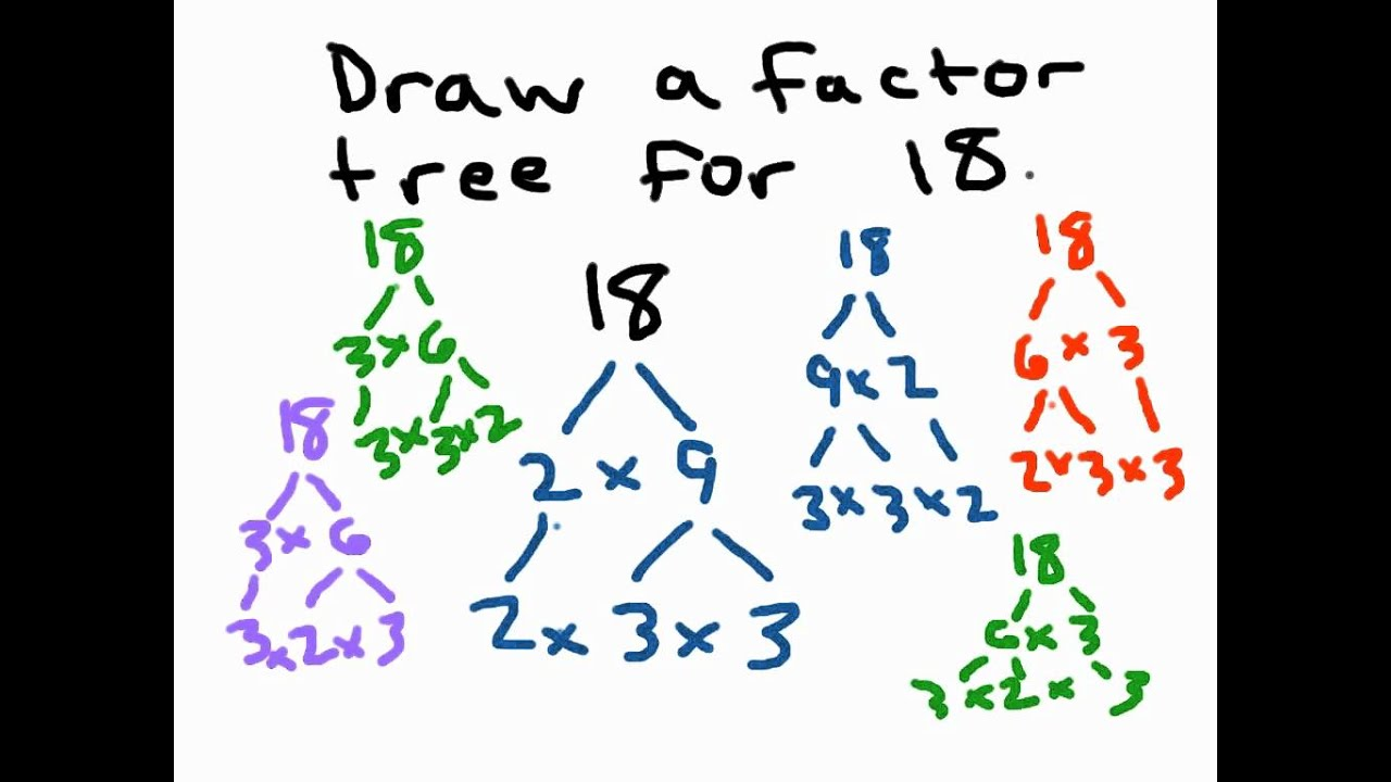 worksheet Prime Factorization Tree Worksheets factor trees youtube