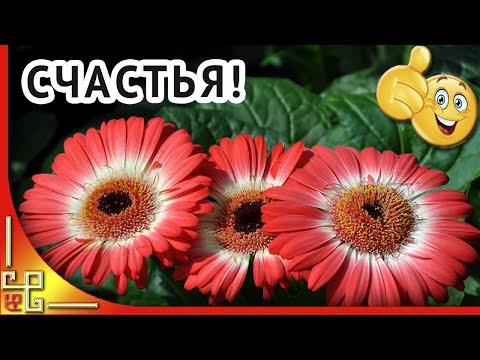 Желаю счастья! Красивые цветы музыка и пожелания