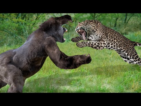 10 Most POWERFUL Land Animals In The World!