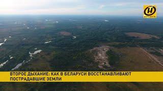 Как в Беларуси спасут болота? Спойлер: их состарят на 100 лет!