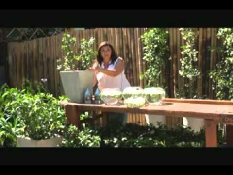 Jardin urbano video did ctico sobre jazmines perfumados for Jardin urbano gijon