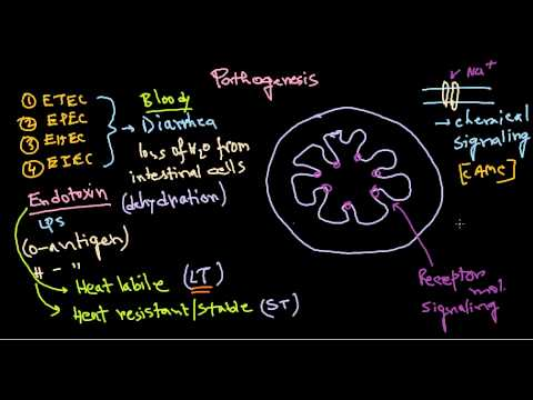 Escherichia coli pathogenesis