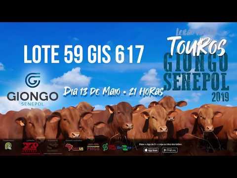 LOTE 59 GIS 617