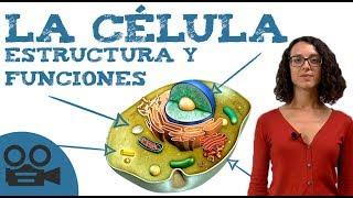 Qué es la célula: estructura y funciones