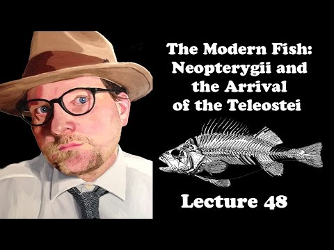 Lecture 48 The Modern Fish: Neopterygii And The Arrival Of The Teleostei