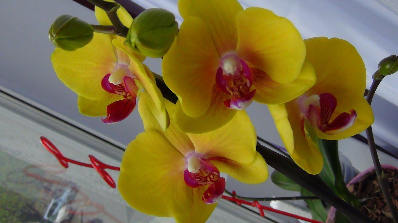 Орхидеи из Тайвани. Открываем посылку из Азии. - YouTube