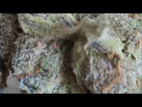 (Frosty 'Girl Scout Cookies' Weed), Dry Pipe Smoke Sess with AL