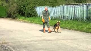 Pro Dog Uk-gloucestershire: Bruno Obedience