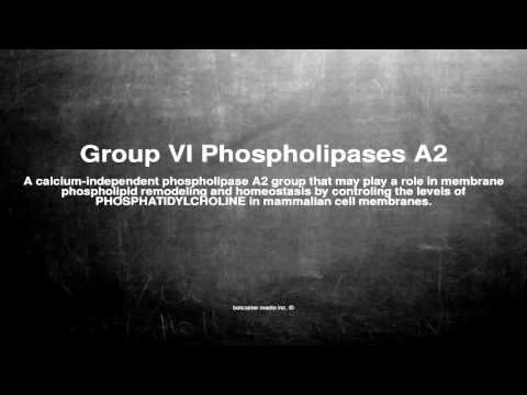 Medical vocabulary: What does Group VI Phospholipases A2 mean