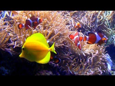 """Aquarium with Natural Wave Sounds 60mins """"Sleep Sounds"""""""