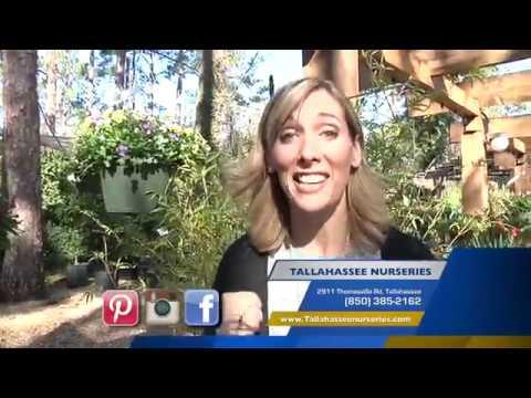 Tallahassee Nurseries Garden Center Tour
