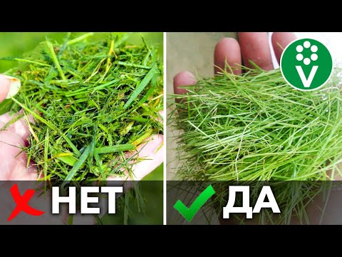5 НЕТ ПРИ МУЛЬЧИРОВАНИИ ТРАВОЙ! Используйте скошенную траву правильно для повышения плодородия