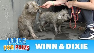 Two dogs in the sewer cried for help until someone heard them!!!