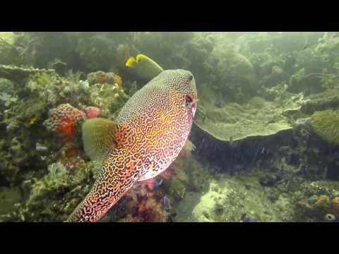 Diving in Timor Leste & Komodo
