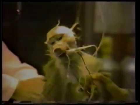 PETA Campaign Video: Unnecessary Fuss - 1984