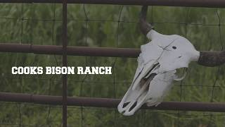 Cook's Bison Ranch