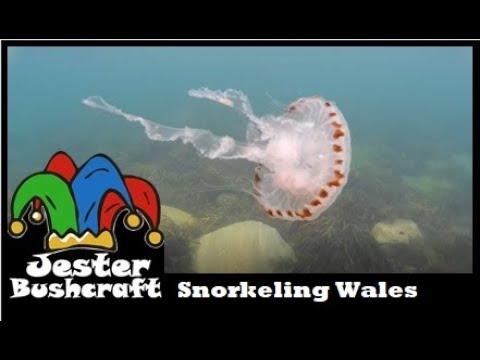 UK Snorkeling Llwyngwril Beach, Wales